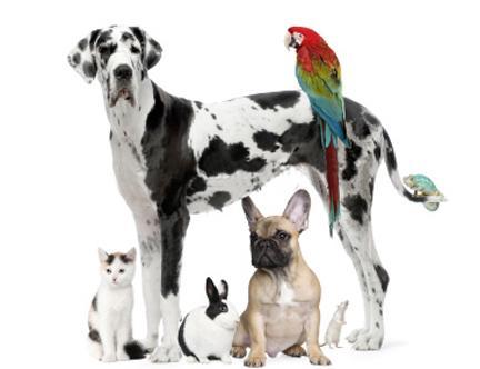 Pet Picture